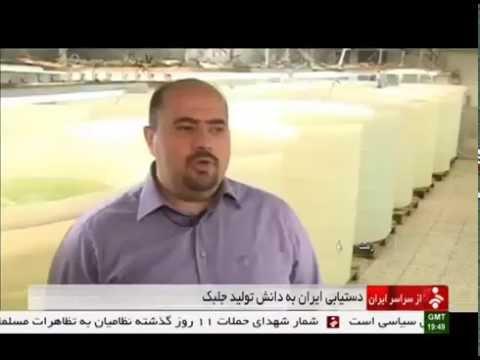 Iran made Organic Algae Fish food, Rasht city ساخت غذاي ماهي ارگانيك از جلبك رشت ايران