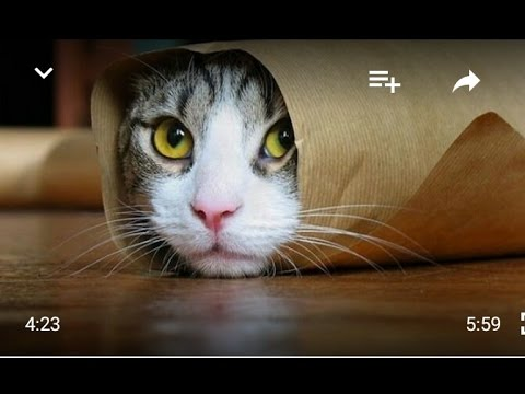 Cat Dancing On Punajbi Song 3 peg sherry maan| Funny Kitten Dance and playing vidoe