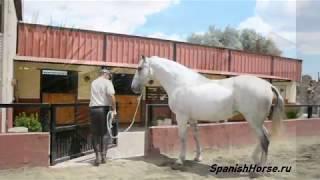 Продам, лошадь на продажу