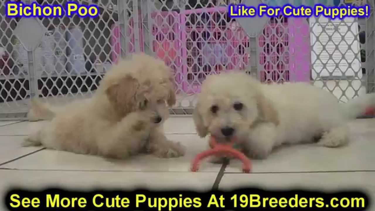 Dogs For Sale Dothan Al
