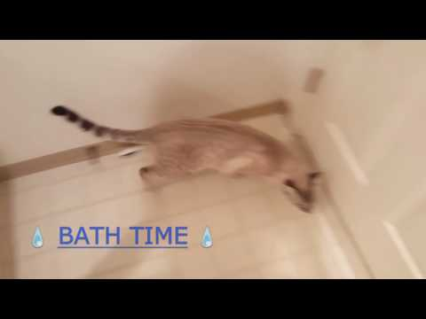 Kitty Bath Routine