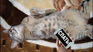 Может ли смартфон усыпить кота?