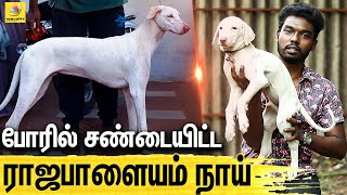 All About Dogs Episode 3   Rajapalayam Dog
