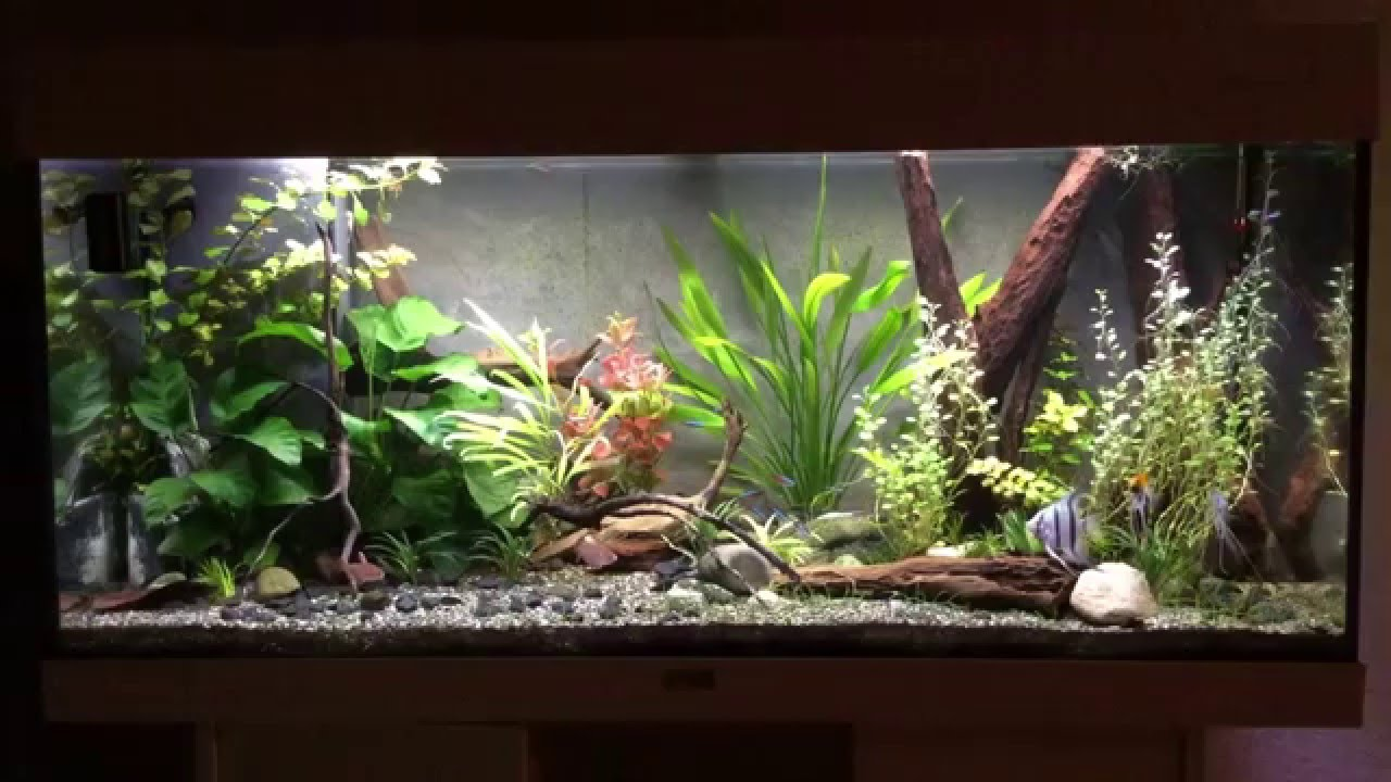 Led Aquarium Beleuchtung Juwel Rio 180 Led Technik Sera X Change Tubes Mit Sonnenuntergang Sunrise Youtube