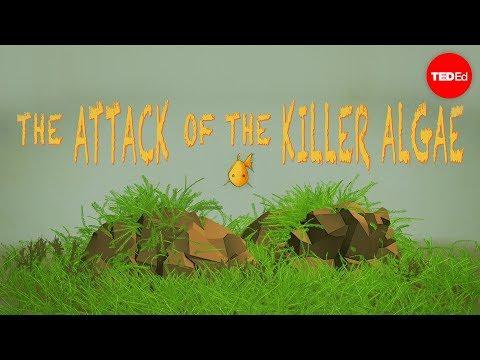 Video image: Attack of the killer algae - Eric Noel Muñoz