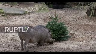 LIVE: Berlin's zoo animals snack on Christmas trees