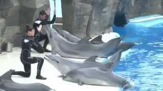 Дельфинарий в Батуми 2012 - Batumi dolphin show