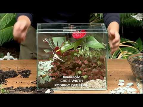 Dica Expressa: Aprenda A Montar Um Terrário De Plantas