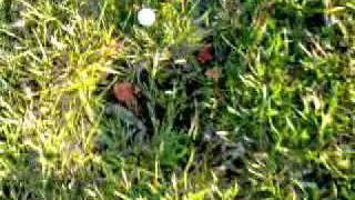 My Ballista Test Firing A Golf Ball And Arrow (catapult)