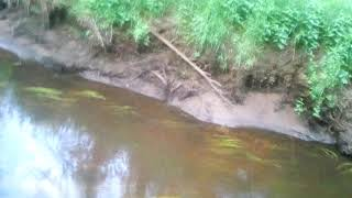 Рыбалка на таёжнай речке
