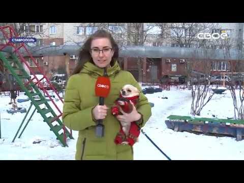 Новости Ставропольского края. Своё ТВ. Выпуск от 20.02.2020, 10:30