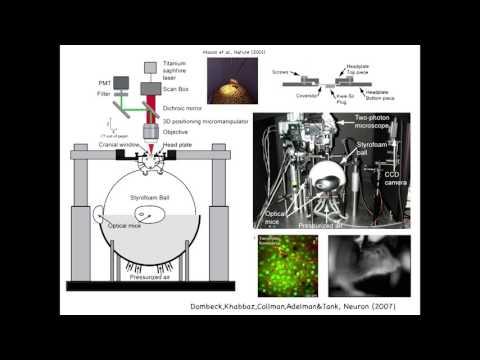 Neural Circuit Dynamics During Virtual Navigation and Decision-Making - David Tank