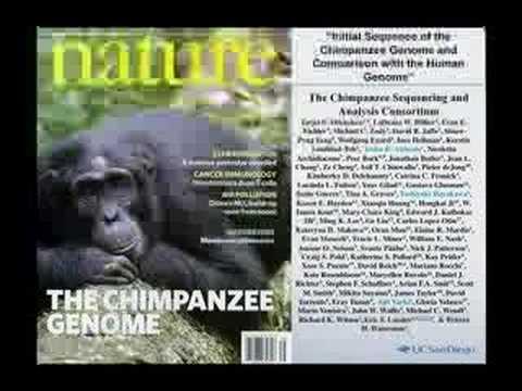 Primate Evolution and Human Disease