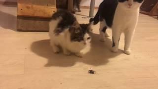 Кошки - охотники!