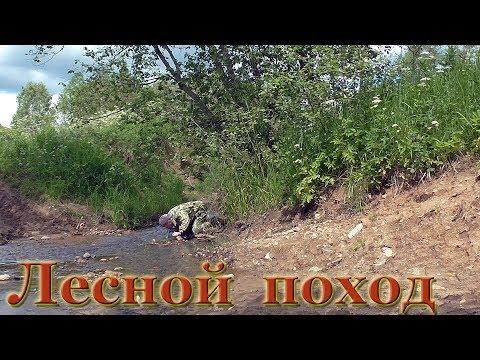 Поход в лес l ПВД l Лесная дорога l Старые урочища