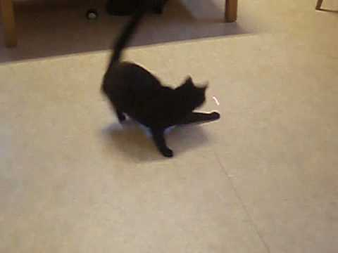 Every cat dance now!