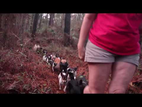 Rat Terrier Roundup