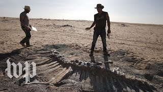 Dinosaur bones lie in wait as Niger battles coronavirus
