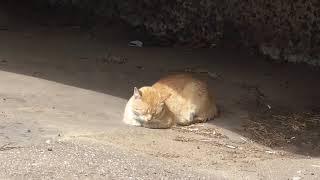 Инь и Ян одного кота.  Не Кот Шредингера