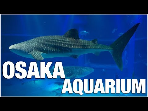 Osaka Aquarium Kaiyukan, 海遊館, located in the ward of Minato in Osaka, Japan,