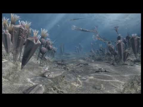 The Upper Ordovician Sea - interactive 3D application