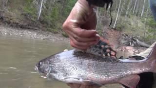 Рыбалка в тайге на хариуса 3 день из 10 дней рыбалка охота тайга лес природа поход выживание в лесу