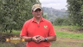 Programa Campo al Campo Aguacate hass