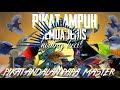 Pikat Semua Burung Kecil Anti Zonk Anti Gagal  Mp3 - Mp4 Download