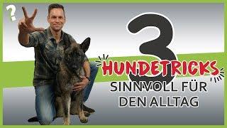 3 sinnvolle Hundetricks für den Alltag | Hundeerziehung