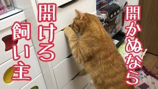 なんとかして引き出しを開けたい猫がかわいい!