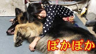 grandchild and #GermanShepherd dog#シェパード犬#ポテトチップス。大...