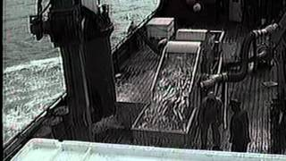 Fish Pump-Herring-SILKSTREAM 1015- Kamishak Bay, AK., USA