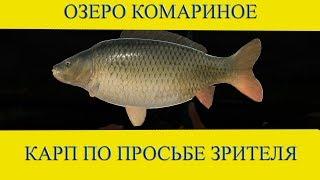 Сазан на Озере. Русская Рыбалка 3.99.