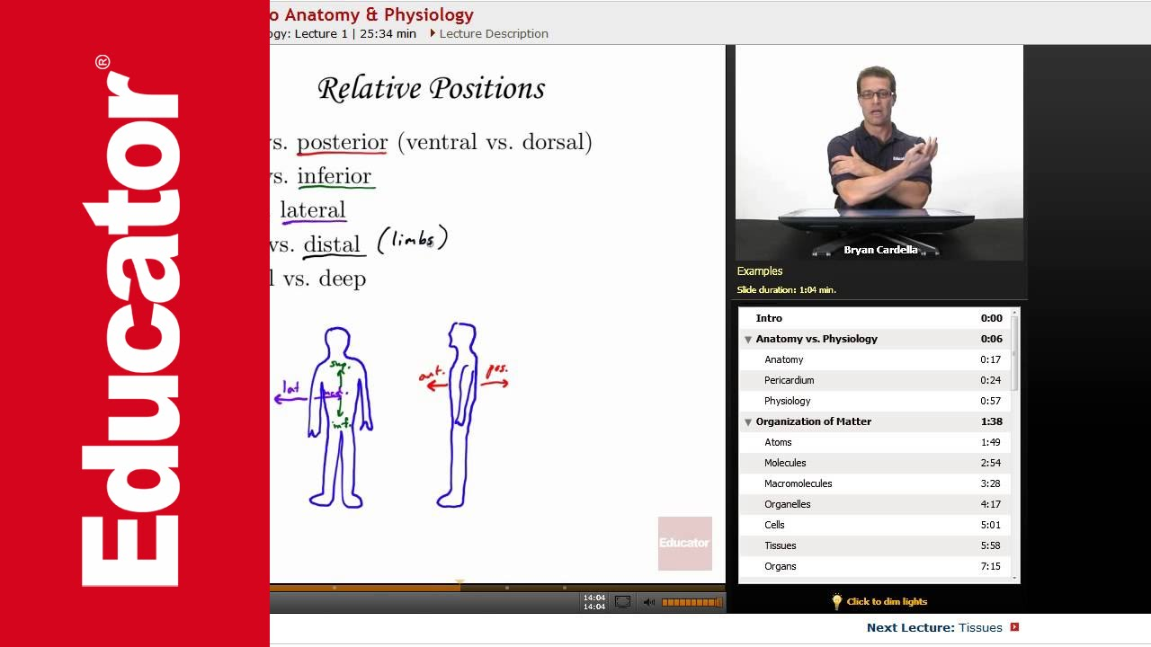 Introduction To Anatomy And Physiology Youtube