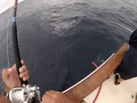 Shogun tuna fishing 8 day August 29th 2014 day 1