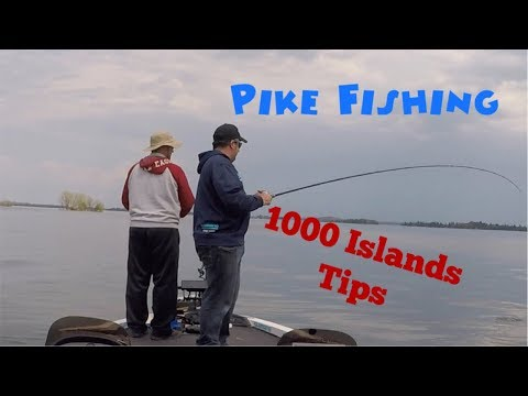 Pike Fishing Tips On 1000 Islands