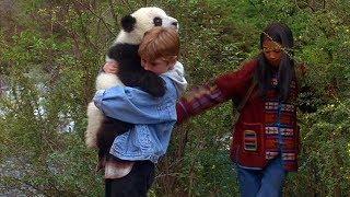 Meu Amigo Panda - Trecho dublado