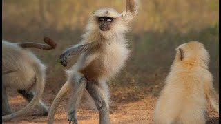 Top ULTIMATE Funniest Animal Fails Compilation