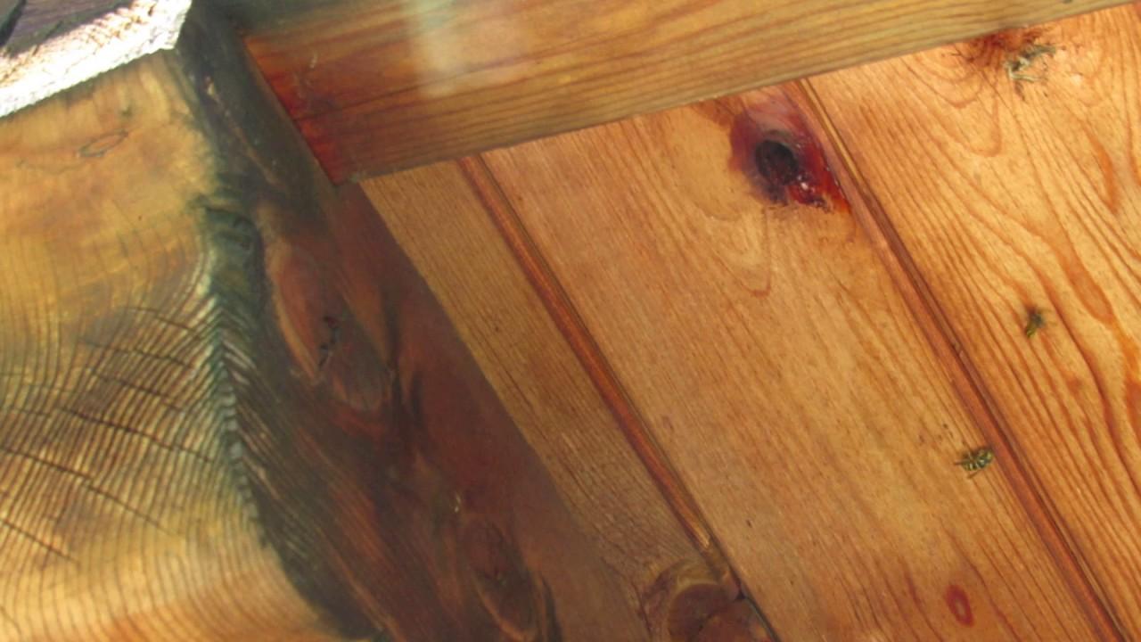 wespen vertreiben erfolgreich mit kokos l youtube. Black Bedroom Furniture Sets. Home Design Ideas
