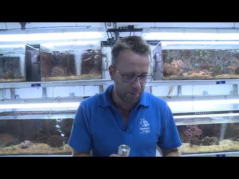 [NCTV] Les coulisses de la science - L'aquarium du lagon