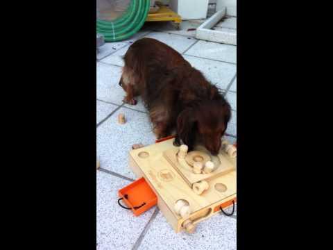 """My Intelligent Dogs - Das Spiel """"Schildkröte"""""""