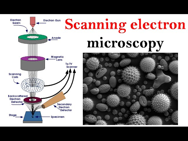 sddefault - Principle Of Electron Microscopy And Its Applications
