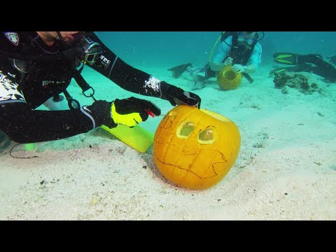 The Penthouse Blog - Underwater Pumpkin Carving Contest