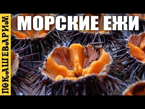 Вопрос: Как обрабатывать укол морского ежа?