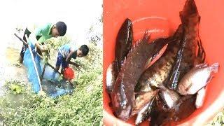 গ্রামের নদীতে জাল দিয়ে মাছ ধরার কৌশল..দেখুন ২ জন মিলে কতগুলো মাছ ধরলো !!