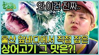 상어 돔배기부터 붕장어 구이까지! 알차게 해산물 먹방 …