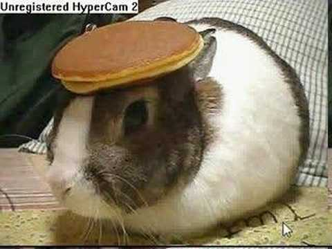 bunny with a pancake on it