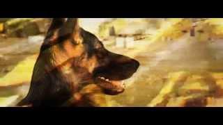 The Dog School Ad (dec2013-1)