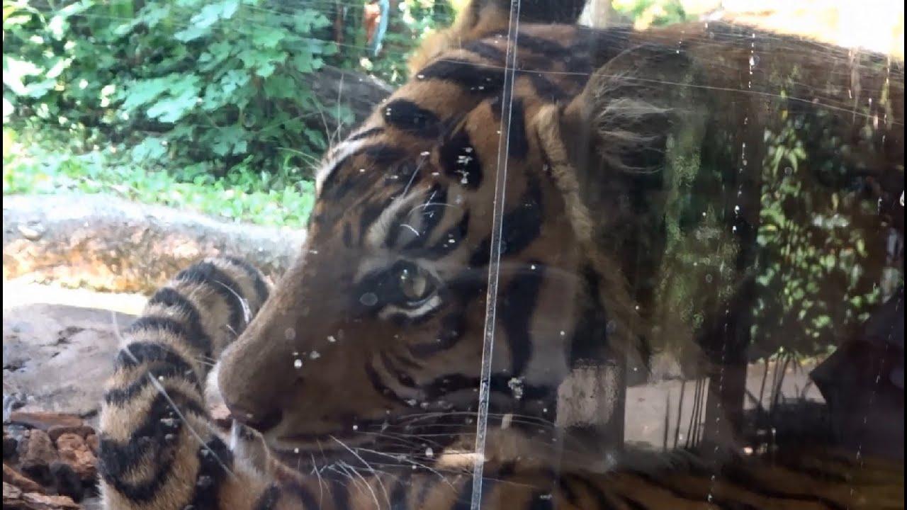夏の上野動物園の動物たち 2020年8月4日観覧