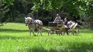 Прогулка по Спасскому-Лутовинову (усадьба И. С. Тургенева)